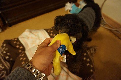 バナナで遊ぶモカ