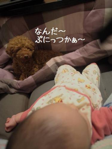 モコ&ぷにっつ