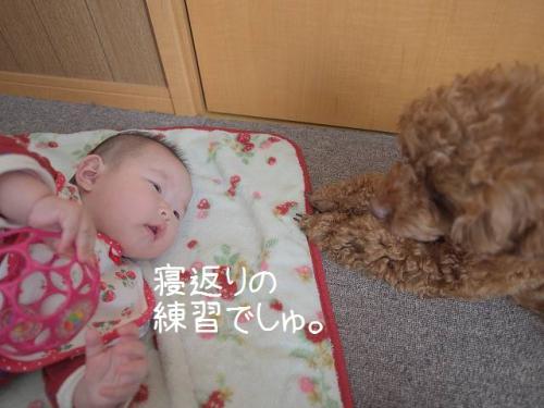 寝返り指導2