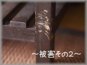 P6135092.jpg