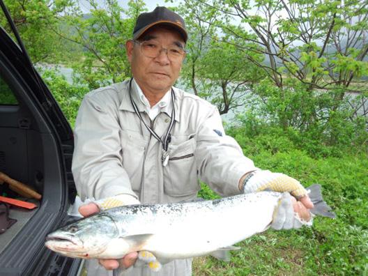2012 荒川サクラマス釣り