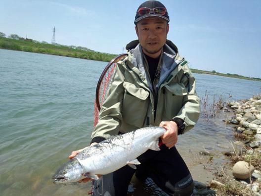 荒川サクラマス釣り情報
