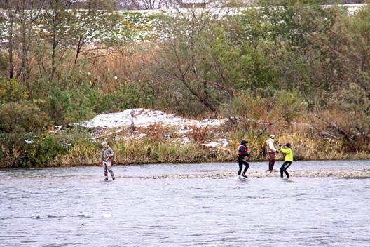 荒川鮭(サケ)釣り 12月2日