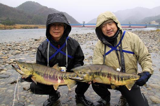 荒川鮭(サケ)釣り 12月4日
