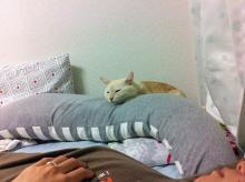 チャイ抱き枕2