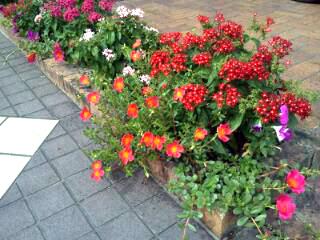花壇の花 のコピー