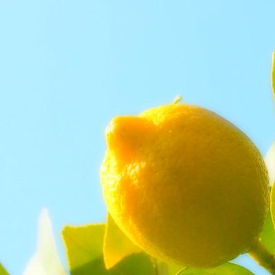 「檸檬」という漢字。書けないというか書く気がないと言うか…。書く機会はありませんね、なかなか。