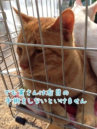 fc2blog_20140119160308e0c.jpg