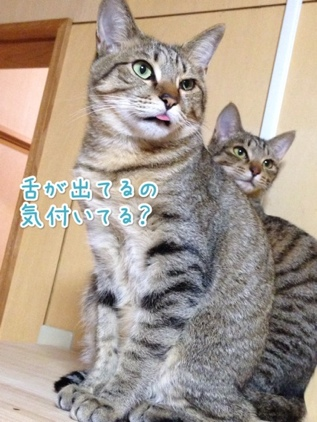 fc2blog_20140119221437b03.jpg