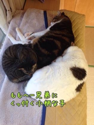 fc2blog_2014012116034379c.jpg
