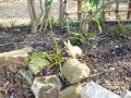 庭のうさぎ