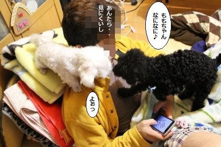 IMG_7639_1yottokk20004103d897ぽ