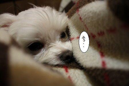 IMG_7837_1ittummr98745ddd87454ぽ
