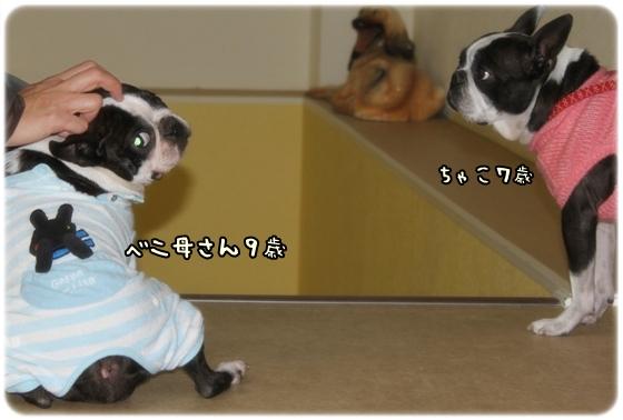 ちゃことべに(2010.2)