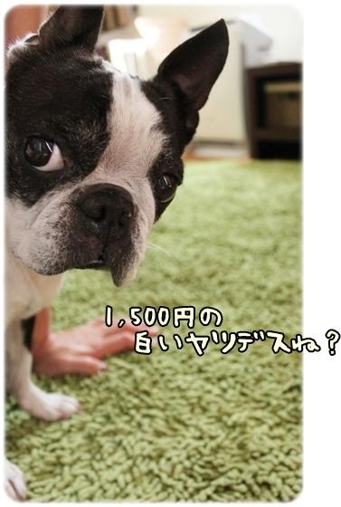 IMG_5923.jpg