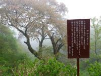 弥彦山周辺7