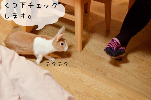 a_DSC6875.jpg