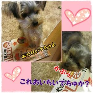 愛犬の友1