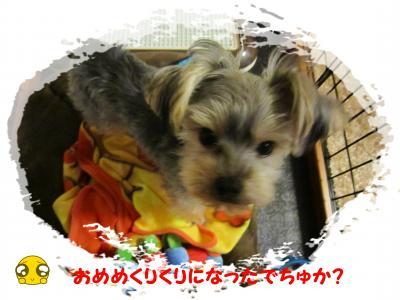 繝槭・繧ォ繝・ヨ・狙convert_20121125232831