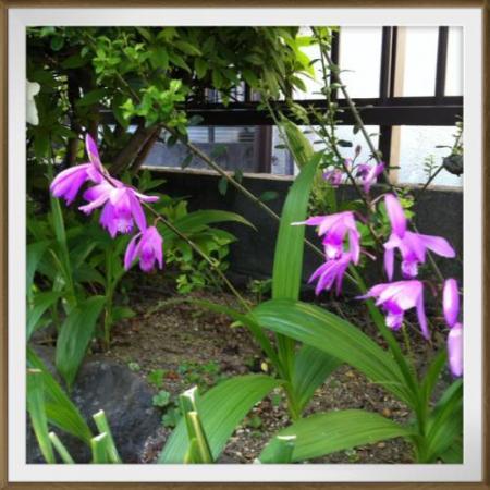 花庭の 008