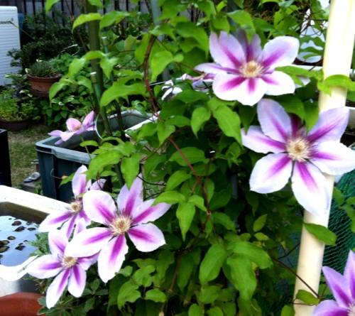 花庭の 001