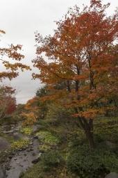 ここは紅葉真っ盛り