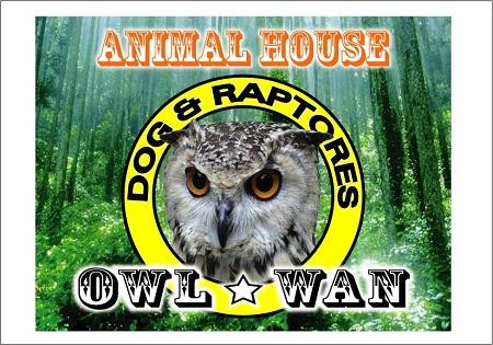 OWL_WAN-H23_6_8.jpg
