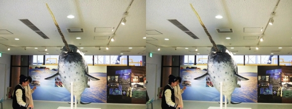 海遊館 H②(平行法)