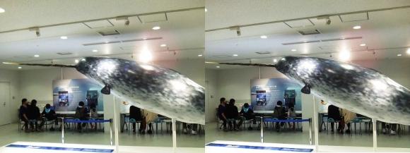 海遊館 H①(交差法)