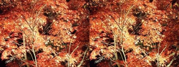 清水寺の紅葉②(平行法)
