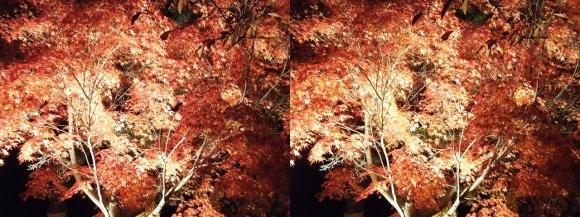 清水寺の紅葉①(平行法)