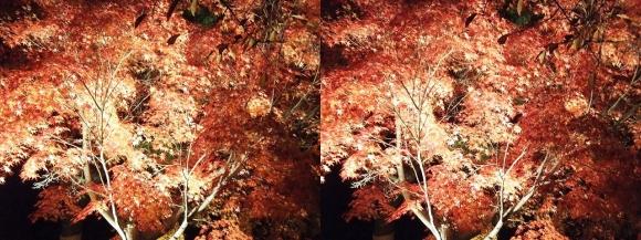清水寺の紅葉①(交差法)