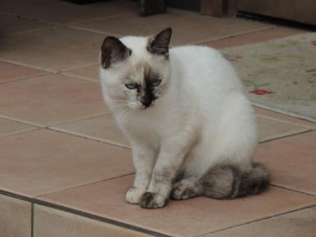 N3216路傍のネコ