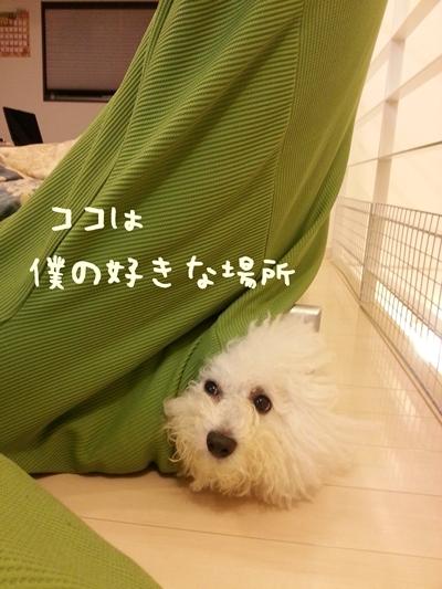 20121119_205439.jpg