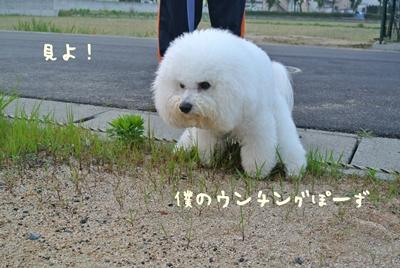 DSC_2183_20121227234533.jpg