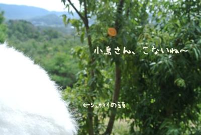 DSC_3766.jpg