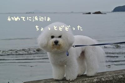 DSC_5048_20121205011433.jpg