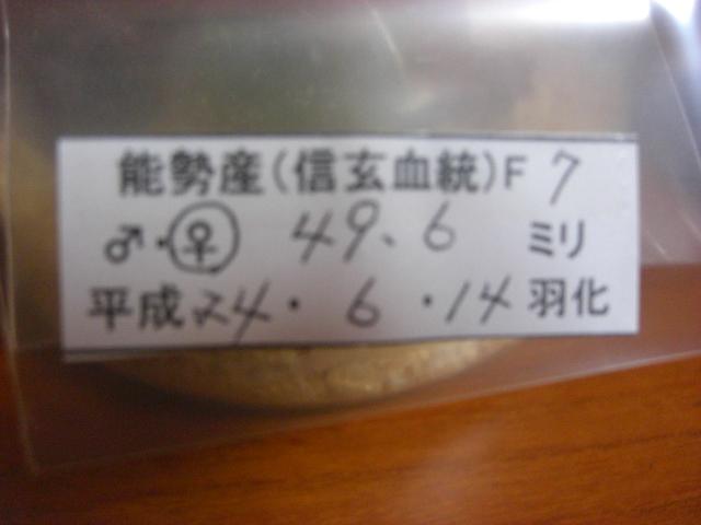 13SN496-01.jpg
