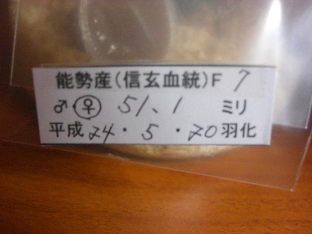 13SN511-01.jpg