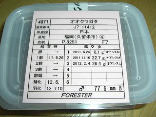 13KR-FORESTER♂