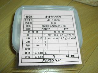 13KR-FORESTER♀