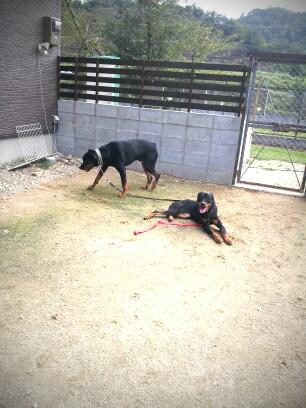 fc2blog_201209051947438e8.jpg