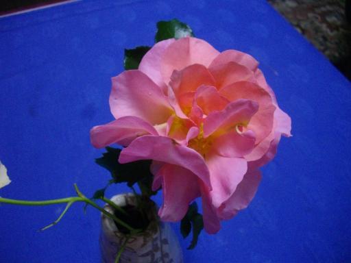 今日のバラ3