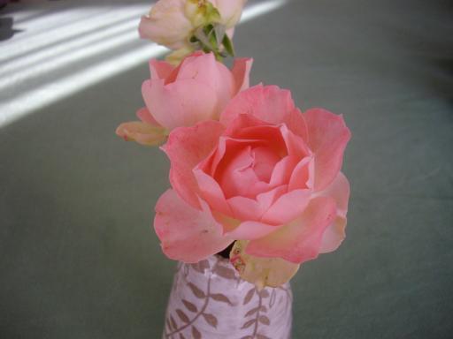 冬のバラ4