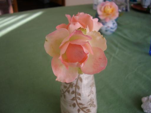 冬のバラ5