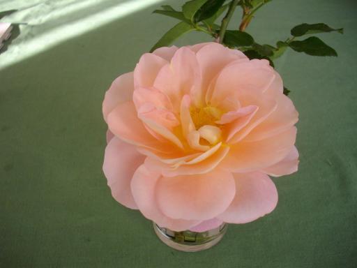 冬のバラ6