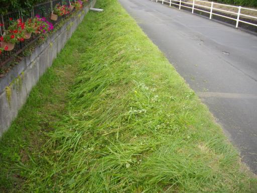水路の草刈2