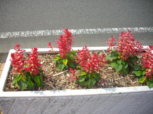 運動公園の花壇3