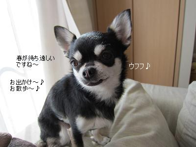 IMG_6555⑤