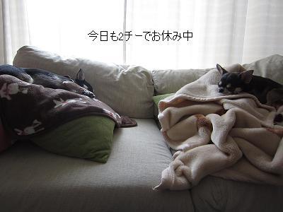 IMG_1156.jpg